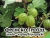 Frensko_Grozde_Carigradsko
