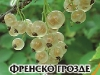 Frensko_Grozde_White