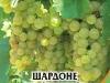 Loza_Chardonnay