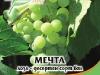 Loza_Mechta