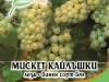 Loza_Misket_Kailashki