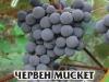 Loza_Misket_Red