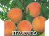 Praskova