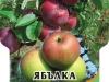 Yabalka